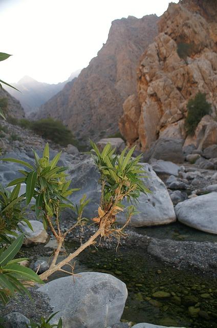 Oman, Wadi, Mountains