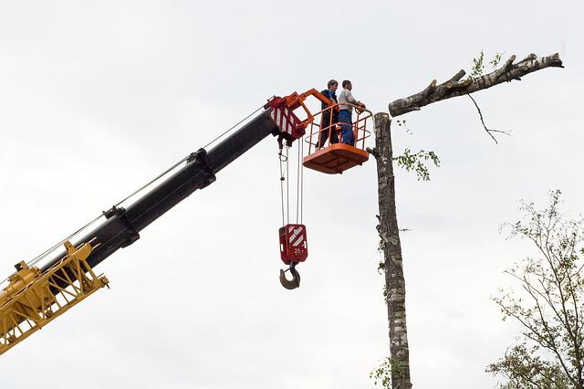 Sawing, Tree, Birch, Chainsaw, On High, Working, Crane