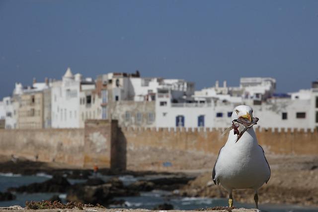 Seagull, Eat, Bird, Water, Water Bird, On The Water