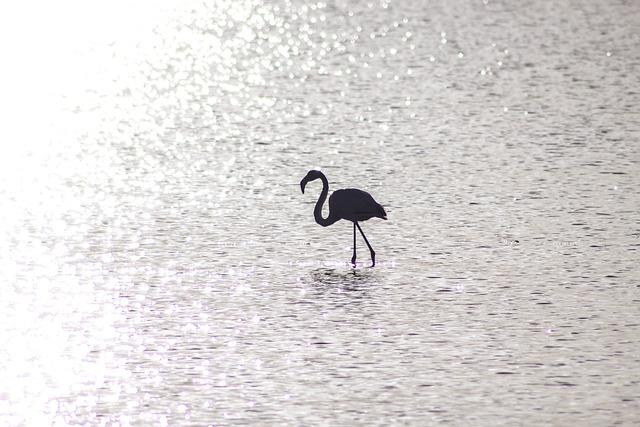Flamingo, Water, Sun, Reflection, Alone, One