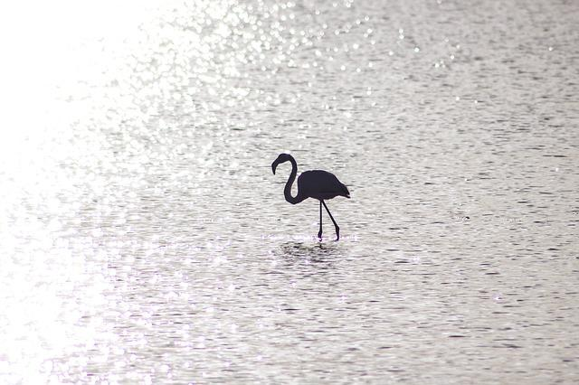 Flamingo, Water, Sun, Reflection, Alone, One