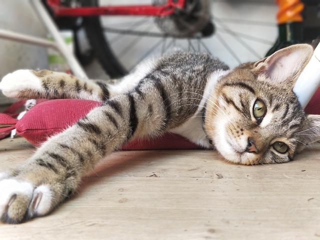 Cat, Animal, Oneplus5, Kitten, Tired, Relaxing