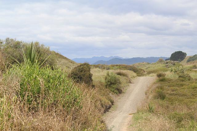 New Zealand, Opotiki, North Island, Trail, Dunes