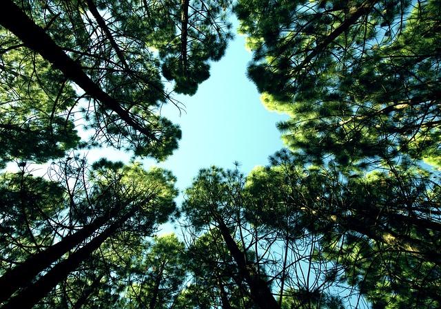 Up, Sky, Looking Up, Optimistic, Optimism, Belief
