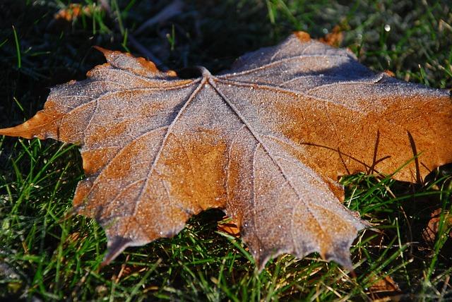 Autumn, Leaf, Fallen Leaves, Orange, Autumn Leaves