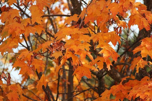Autumn, Yellow, Orange, Leaves, Golden, Wanaka