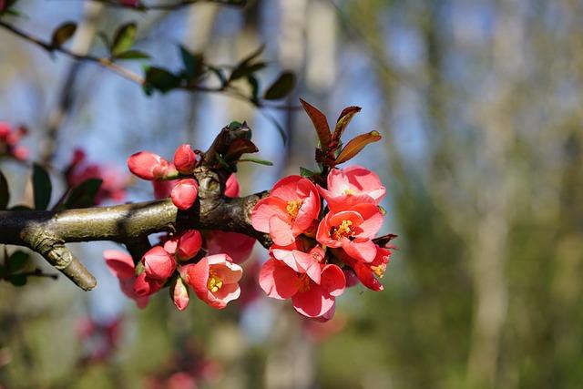 Bill Quince, Flowers, Red, Orange, Red Orange