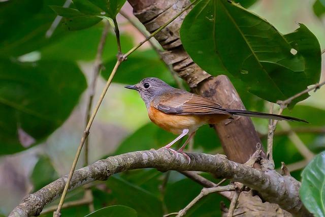 Birds, Orange, Twigs, Eyes