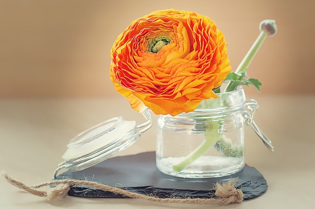 Ranunculus, Flower, Petals, Blossom, Bloom, Orange