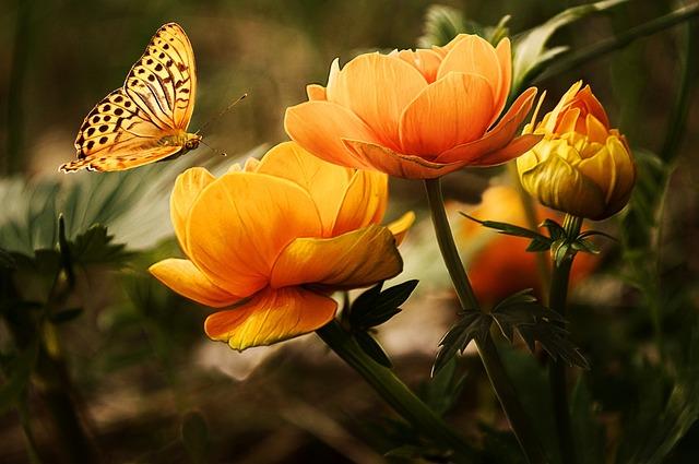 Flowers, Background, Butterflies, Beautiful, Orange