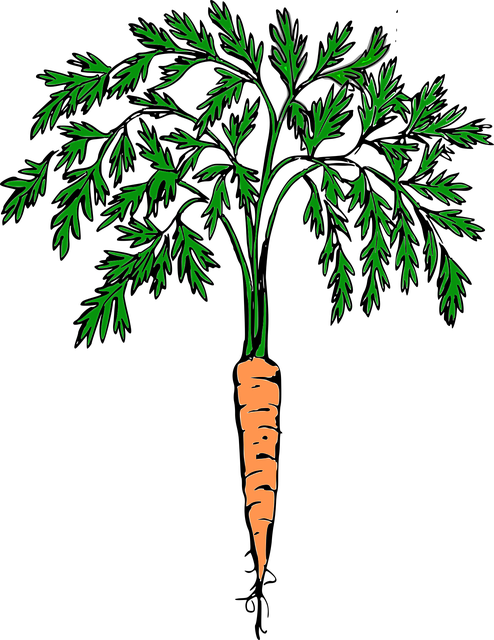 Carrot, Orange Carrot, Vegetables