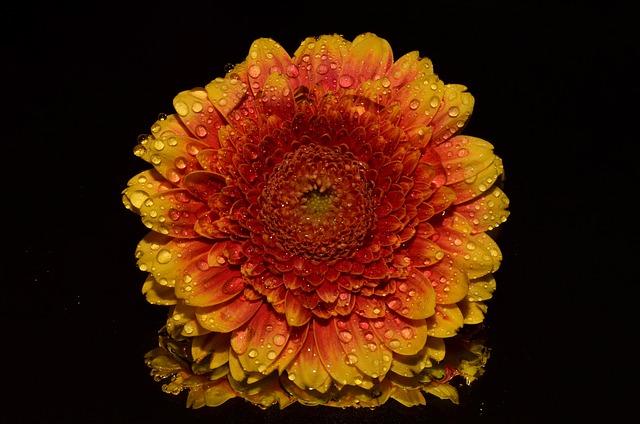 Orange, Flower, Autumn