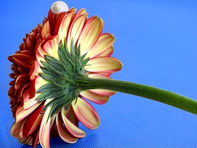 Gerbera, Blossom, Bloom, Close, Flower, Yellow, Orange
