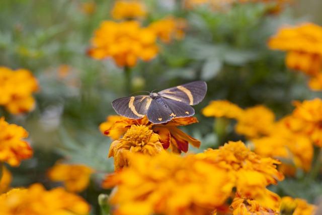 Butterfly, Orange Flower, Bokeh, Blur, Orange, Flower