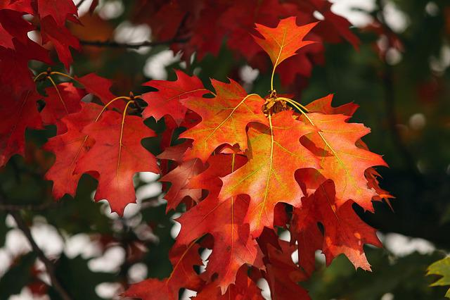 Orange, Leaves, Autumn, Forest, Fall Color, Nature