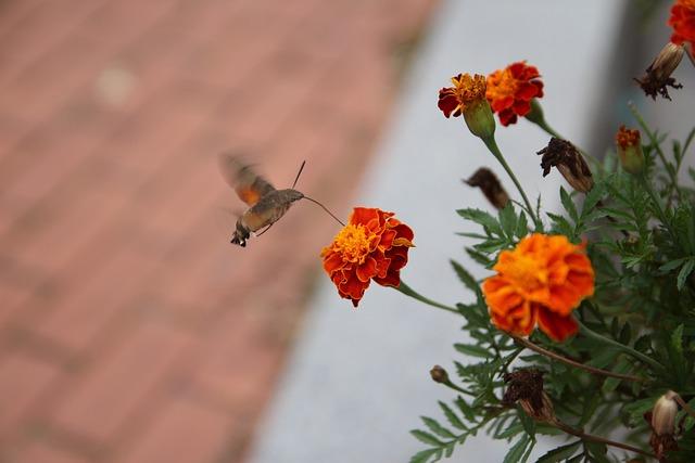 Flowers, Nature, Forest, Mountain, Bug, Autumn, Orange