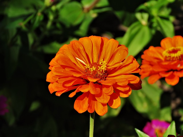 Flower, Orange, Yellow, Garden