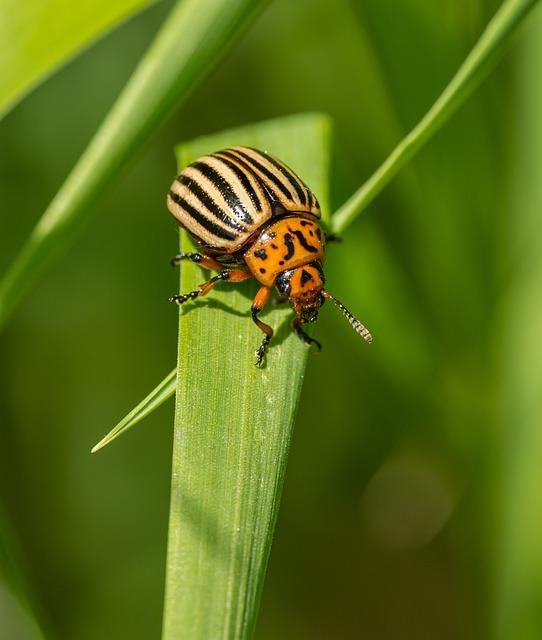 Dock, Beetle, Insect, Stripes, Yellow, Black, Orange