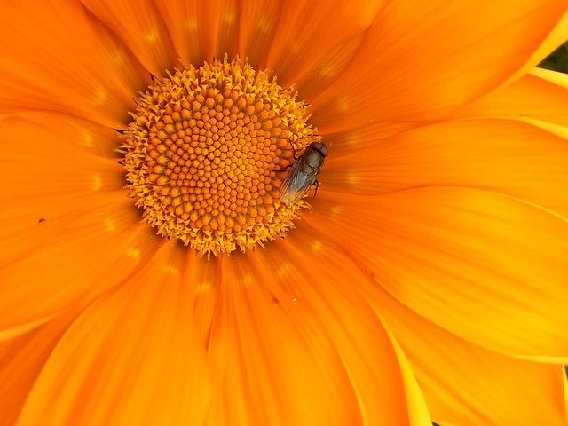 Flower, Fly, Orange, Nature, Insect, Bug, Plant