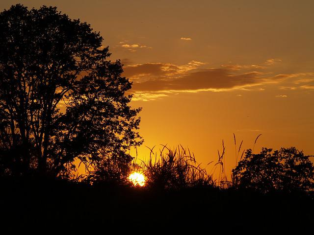 Sunset, Orange, Trees, Sky, Nature, Sun, Landscape
