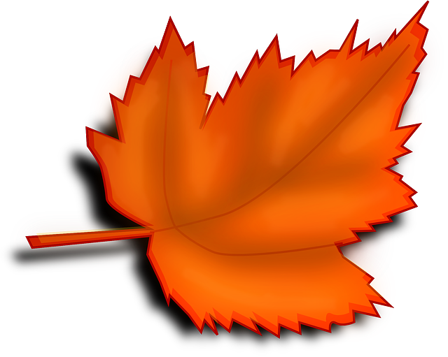 Maple, Autumn, Fall, Leaf, Orange, Shades