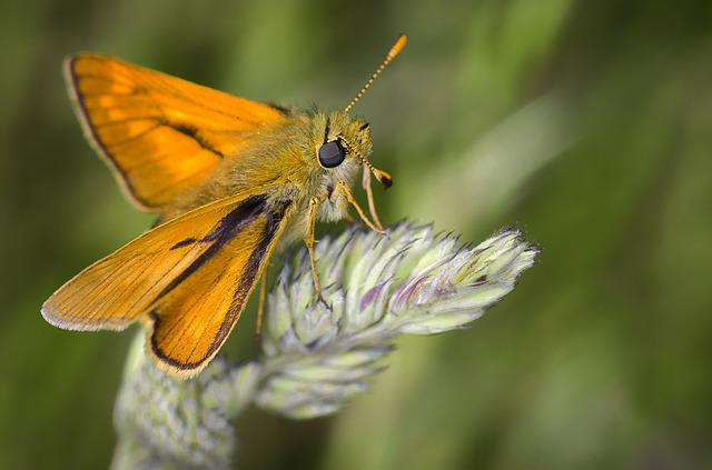 Moth, Nature, Insect, Bug, Macro, Wild Plants, Orange