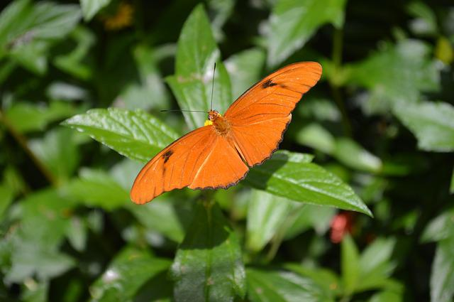 Butterfly, Orange, Insect, Bug, Bright, Fly, Nature