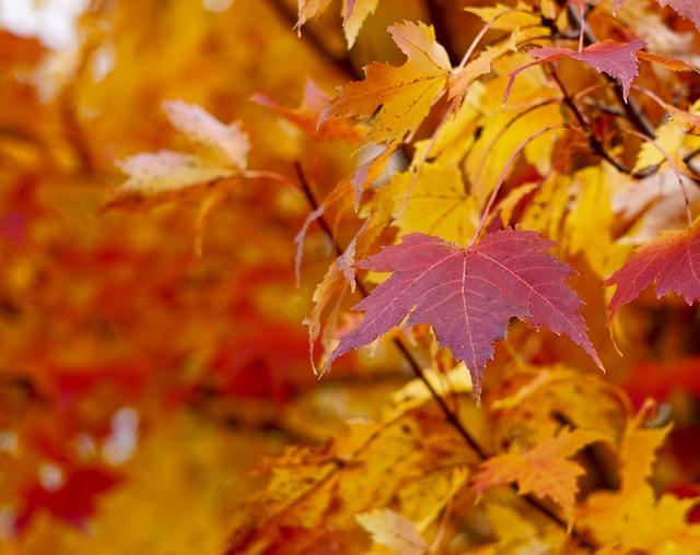 Eaves, Fall, Autumn, Orange, Red, Halloween