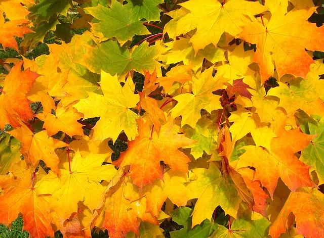 Leaves, Autumn, Fall, Colorful, Yellow, Orange, Season