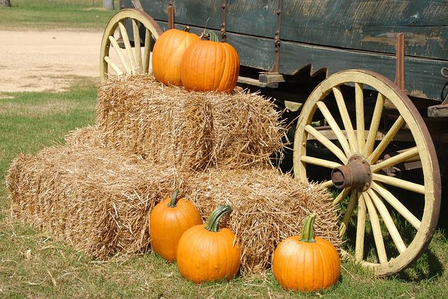 Pumpkins, Wagon, Farm, Halloween, Fall, Autumn, Orange