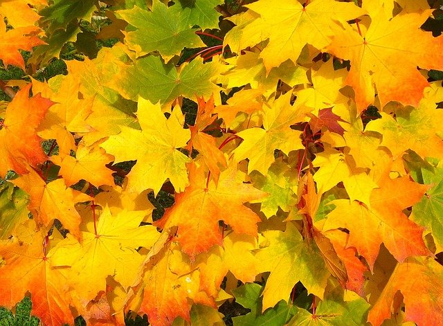 Leaves, Autumn, Fall, Colorful, Yellow, Orange, Season