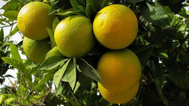Orange, Tree, Nature, Fruit, Food, Agriculture, Yellow