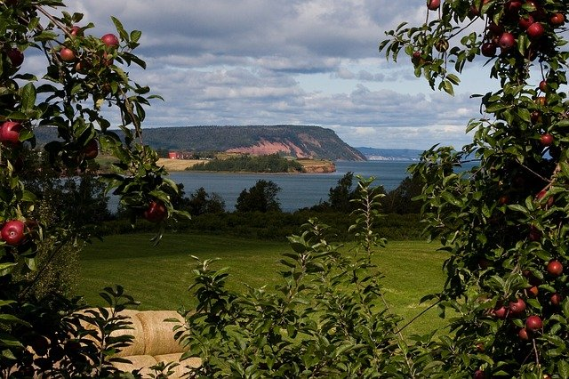 Blomidon, Nova Scotia, Apples, Orchard, Fall, Sky