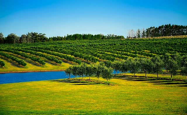 Uruguay, Orchard, Trees, Canal, Water, Irrigation, Farm