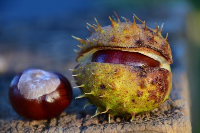 Chestnut, Buckeye, Ordinary Rosskastanie, Autumn, Brown