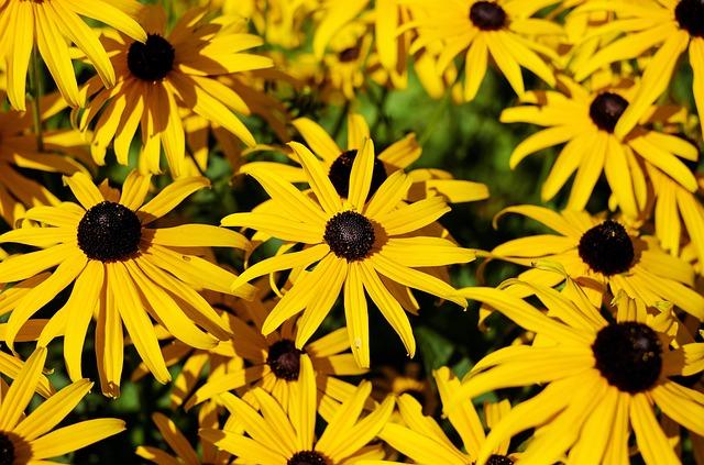 Flower, Sun Hat, Ordinary Sonnenhut, Flower Yellow