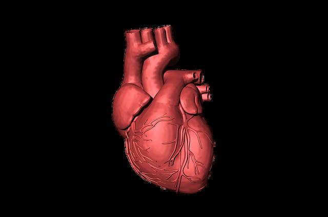 Heart, Blood, Organ, Human, Beat, Life