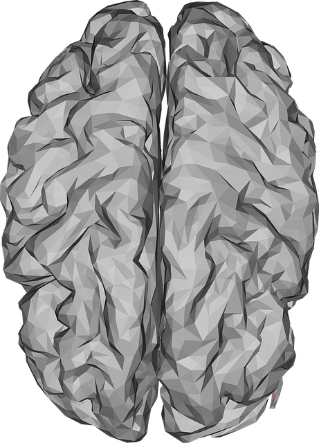 Brain, Low Poly, Polygons, Triangles, 3d, Organ