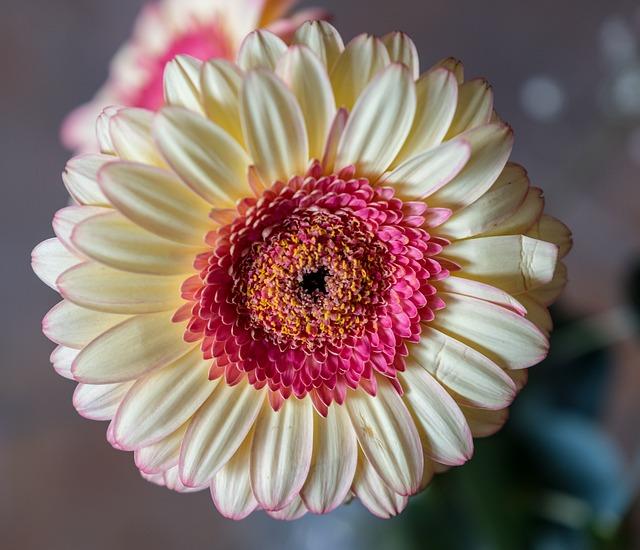 Flower, Petal, Plant, Nature, Floral, Ornament