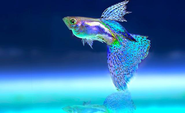 Fish, Ornamental Fish, Aquarium