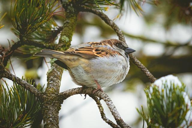 Ornithology, Animal, Winter
