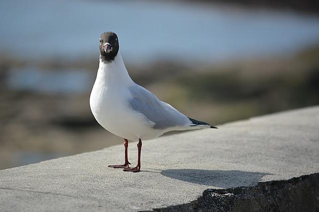Bird, Tern, Seagull, Wild, Sea bird, Ornithology