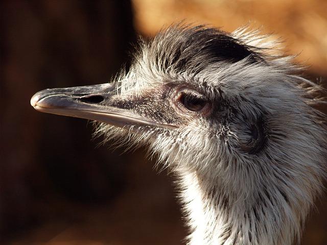 Bird, Animals, Ostrich