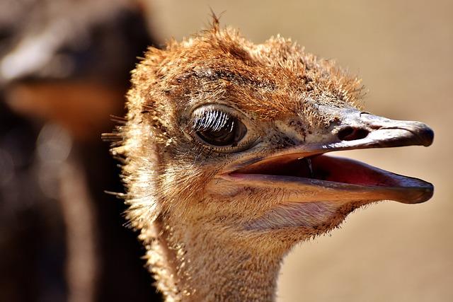 Bouquet, Ostrich Farm, Cute, Bird, Poultry, Feather