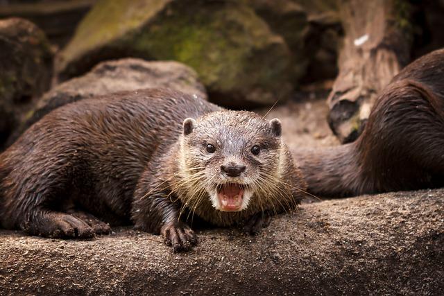 Otter, Animal, Mammal, Zoo
