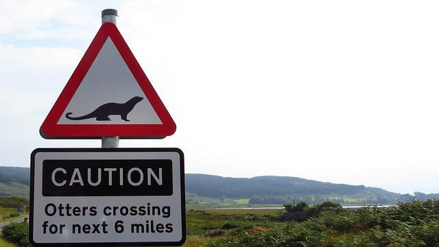 Otter, Road Sign, Warning, Animals, Street Sign, Risk