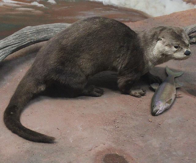 Otter, Fish-eater, Mammal, Wildlife, Aquatic, Hunter