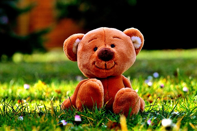 Teddy, Meadow, Cute, Teddy Bear, Out, Child, Nature