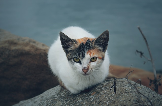 Cat, Kitten, Pet, Animal, Rock, Outdoor