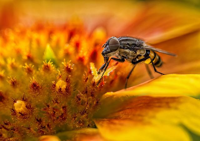 Insect, Nature, Bee, Flower, Outdoor, Close Up